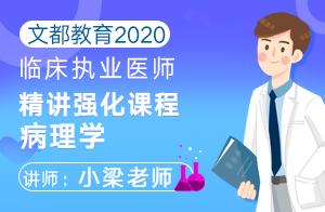文都教育2020临床执业医师精讲强化课程病理学