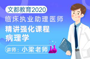 文都教育2020临床执业助理医师精讲强化课程病理学